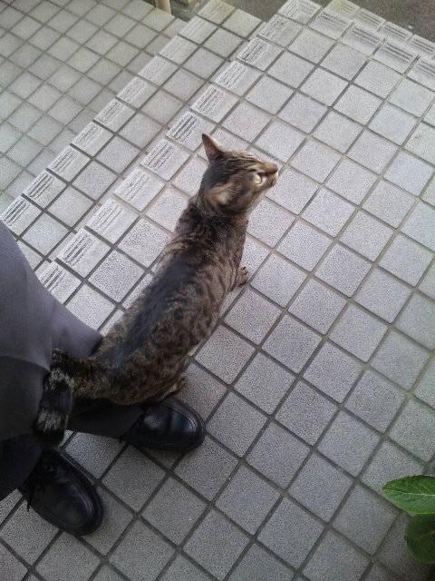 猫の縄張りを越えて